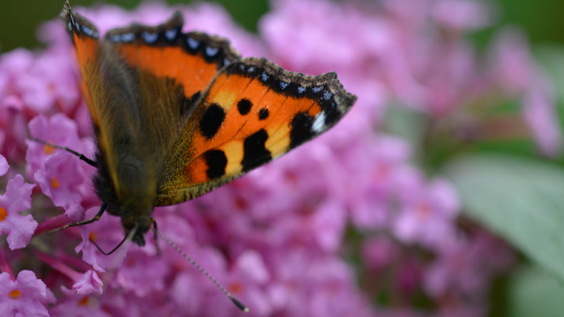 Garden-butterfly-enivironmental-education