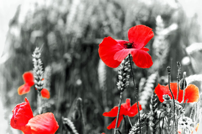 British Legion Remembrance Day Sgt Will Bough Royal Scots Tribute