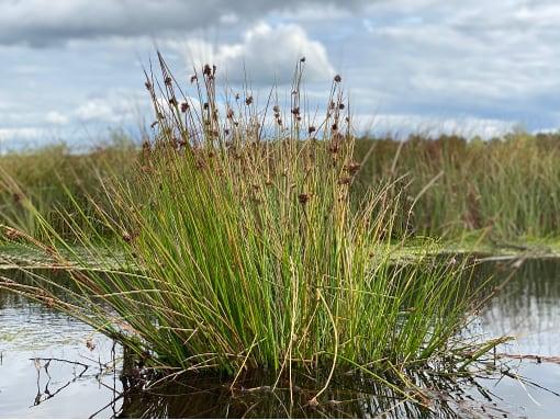 Flanders Moss Stirlingshire