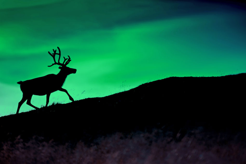 Asta-and-the-Celtic-Raid-Deer-on-hill