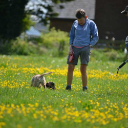 Puppy-dogs-and-owners-in-a-buttercup-field-on-a-Spring-day