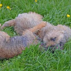 Ben-after-Isla-in-grass
